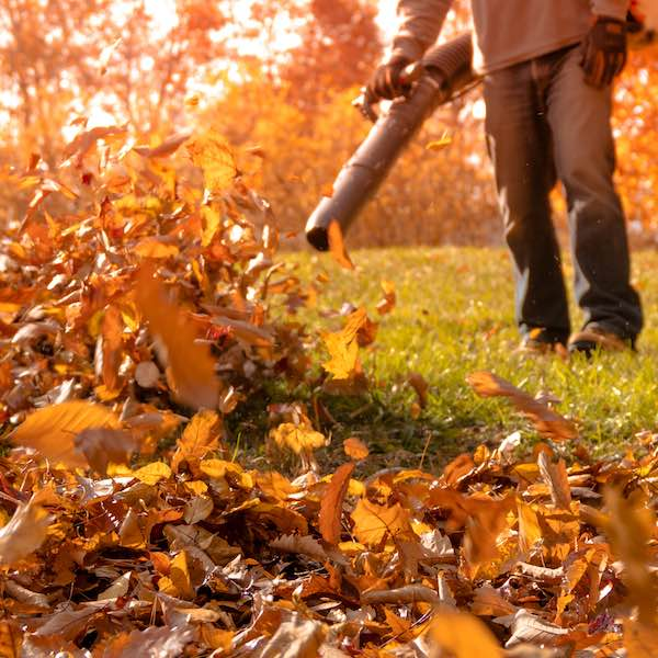 Spring and Fall Cleanups NH