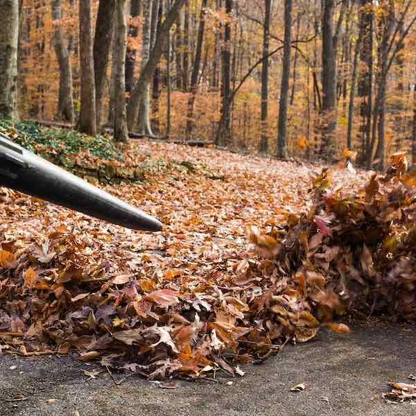 NH Fall Cleanup Services