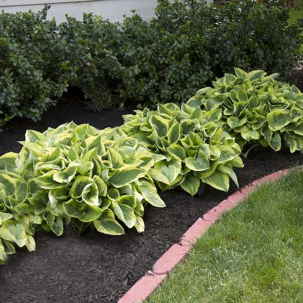 NH Mulch Install Services