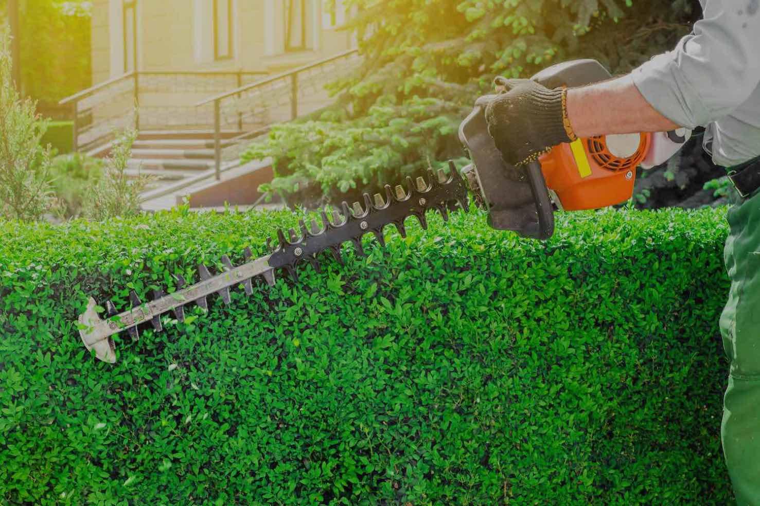 person pruning bush